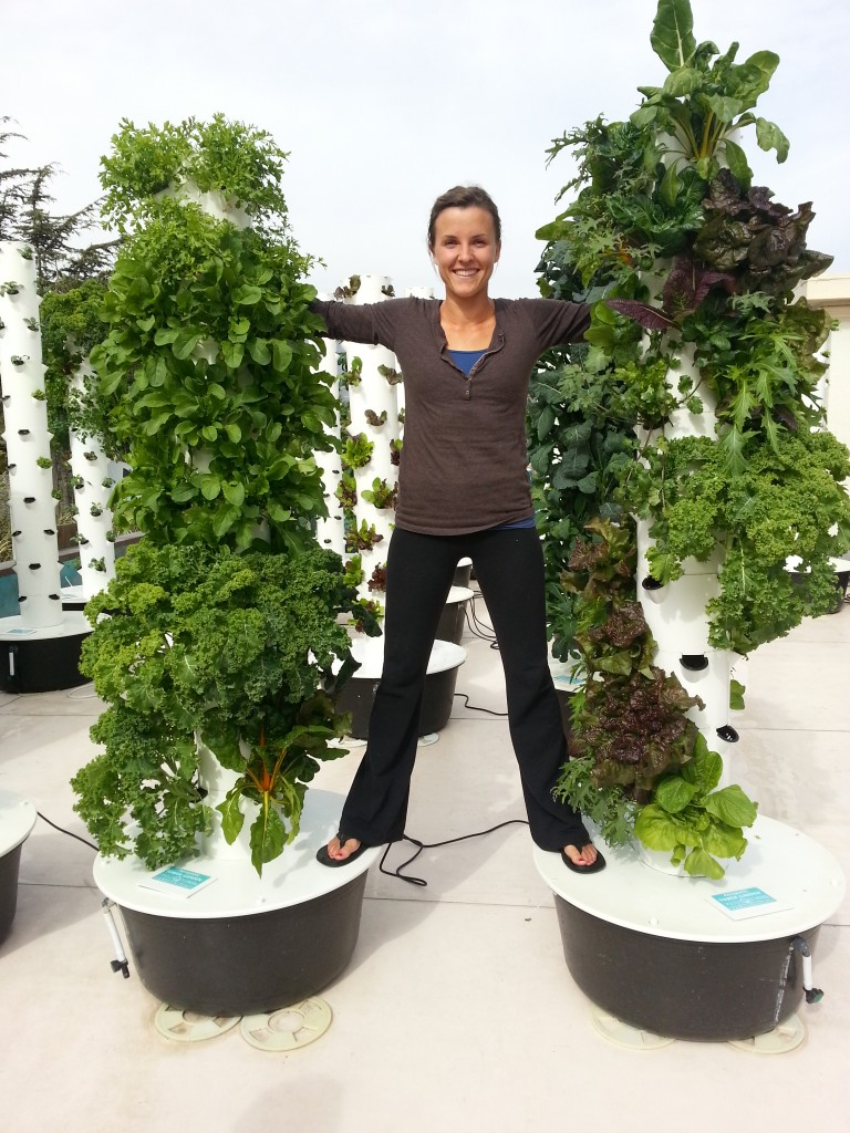 TOWER GARDEN Open House And Overview At Chapala Gardens